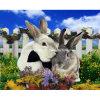 3D Animal Photo