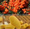 Health Food, Top 100% Natural Wild Seabuckthorn Bee Pollen Chewable, No Antibiotics, No Pathogenic Bacteria, No Heavy Metal, Antiaging, Anticancer, Prolong Life