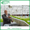 Commercial Hydroponics System for Vegetables