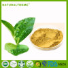 100% Nautral Best Quality Green Tea Polyphenols