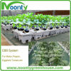 Farm Hydroponics System for Multi-Span Agricultural Greenhouse Type and Large Size High Quality Dutch Bato Bucket