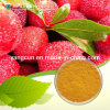 Natural Bayberry Extract 98% Myricetrin