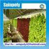 China Modern Design Agricultural Type Solar Greenhouse
