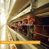 Chicken layer battery cages for Tanzania poultry farm