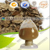 High Quality 100% Natural Rhizome Sichuang Lovage Extract