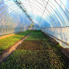 High Sales and Low Price Film Greenhouse