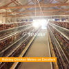 Complete automatic A type battery layer chicken cage for sale