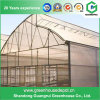 China Plastic Film High Tunnle Greenhouse