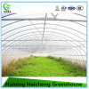 High Quality Tunnel Greenhouse for Vegetable and Fruit