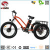 500W Fat Tire Beach Style Electric Tricycle for Rental Shop