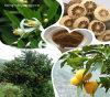 Natural Sweetner: Naringin Dihydrochalcone 98%