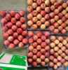 Good Quality or Exporting Fresh FUJI Apple