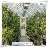 Greenhouse Garden Green House