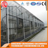 Multi-Span Agriculture Tempered Glass Greenhouse for Flower