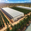 2017 Hot Sale China Factory Film Green House with Hydroponic System for Tomato