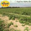 Medlar Lbp Ecocert Certificate Organic Dried Goji