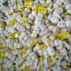 Fresh Garlic Packed in 3p with 10kg Mesh Bag