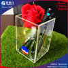 Single Clear Acrylic Pen Holder