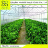 Low-Cost PC Sheet Agricultural Greenhouse Factory Direct Selling