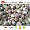 Top Quality Fresh New Crop Solo Garlic