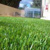Mat Turf Aquarium Football Chinese Wall Artificial Grass