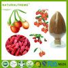 GMP Manufacturer Supply Goji Berry Lycium Barbarum L Extract