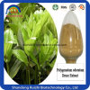 100% Natural High Quality Watercress Extract/Polygonatum Odoratum (Mill.) Druce. /Fragrant Solomonseal Rhizome Extractmining