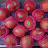 2016 Harvest Exported Standard Red Qinguan Apple