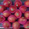 2016 Harvest Exported Standard Red Qinguan Apple