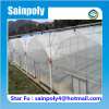 Multi-Span Plastic Film Greenhouse for Grape