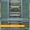 H type Poultry farm equipment automatic chicken layer cage