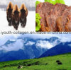 Organic Yak Meat Unique Nutrient Content W-3pufa, Cla Strengthening Tendons Bones, Prevent Cardiovascular N Cerebrovascular, Known as Health Food