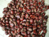 New Crop Fresh Chestnut of China (30-40, 40-50, 50-60, 40-60, 60-80)