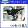 134.2kHz Hitag S/256 RFID Animal Tag with Luxury Box