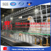 a Type Automatic Broiler Chicken Cage for Poultry Farms
