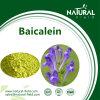 Manufacturer Supply Baicalein Powder 98% CAS491-67-8
