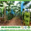 Nonwoven Fabric for Banana Bags (NONWOVEN-SS03)