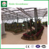 Flower/Fruit/Vegetables Growing Glass Green Houses with Sunshade System
