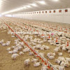 Automatic Pan Feeding Poultry Farm Equipment for Broiler