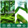 Organic Cucumber Extracts for Skin Care Cucumber Nutrition