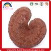 High Quality Ganoderma Lucidum P. E/ Reishi P. E/Reishi Mushroom