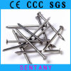 19/20 Galvanized Polished Wire Nails From Chinese Factory