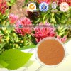 GMP ISO 100% Natural Rhodiola Rosea Extract (free sample) Rosavin 1%-3%+Salidroside 1% HPLC