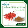 Best Price Wolfberry Extract Powder