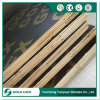 Finger Joint Core/Recycle Film Face Plywood