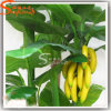 2014 Green Plastic Artificial Banana Trees Made in China