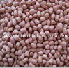 New Crop Peanut Kernels (40/50 & 50/60)