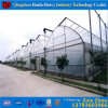 Low Price Specialized in Plastic Tunnel Agricultural Greenhouse for Vegatables /Aquaponics/Cucumber