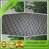 Agriculture UV Stabilized Anti Bird Netting
