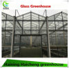 Glass Polycarbonate Hydroponic Greenhouse for Agriculture